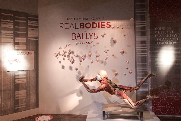COVID-19 Content Added to Las Vegas Strip Attraction - REAL BODIES at Bally's Now Open